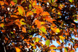 18247 10:47 Day 2 - Light Through The Autumn Leaves