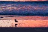 14895 Surf, Sunrise, Seagull