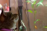 20120303_21751 So Many Fishkies... (Sat 03 Mar)