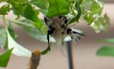 20120318_23441 Through El Gato's Eyes I (Sun 18 Mar)