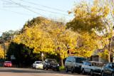 20120406_23664 Autumnal Streetscape (Fri 06 Apr)