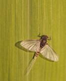 Spinnen & Insecten