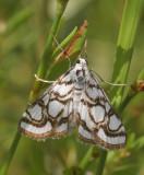 Verschillende soorten vlinders