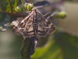 één van de vele vlindersoorten