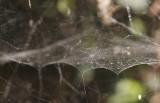 web van visnetspin