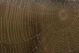web met dauwdruppels