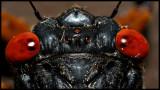 Periodic Cicada II