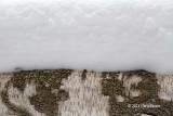 Majority Snow
