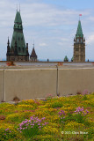 Green Roof on the C.D. Howe Building