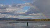 Photographing Shorebirds at Constance Bay
