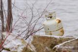 Snowy Owl??