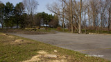 Mass Destruction: Ash Tree Removal at Andrew Haydon Park