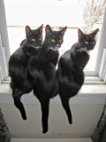 Rosie, Jimi & Rocky in the window