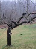 Jimi & Rosie in the little apple tree