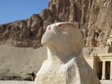Head of Falcon at Hatshepsut's Mortuary Temple