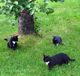 The Brats under an apple tree