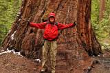 Larry & Sequoia tree