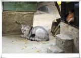«JÖ» & Âùî¿ßÀ\ÆU Cat Village & Cat Cafe