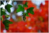 11¤ë.ªZ³® November in Wuling Farm