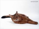 WEB-2011_7200636-02.JPG