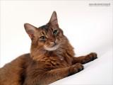 WEB-2011_7200690-02.JPG