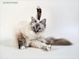 WEB-2011_9181239-02.JPG