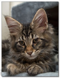 Panter 14 weeks and @ home_1182795