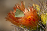 Butterflies & Dragonflies of Sabino Canyon