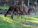 zoo_tour_2012