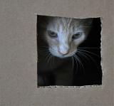 Cat In A Box   #1