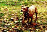 Run Tipitina Run