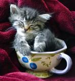 The Little Kitten - August 16, 2011