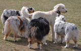 Looks Like a Sheep, Sure Doesn't Smell Like One!