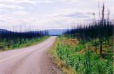 Burned spruce forest on the Klondike Highway
