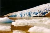 Bear Glacier terminus