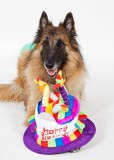 Happy 6th Birthday Indy!!