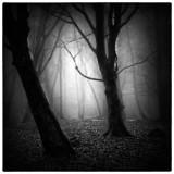 Misty Woods.