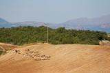 Sheep in the hills near Agios Georgios
