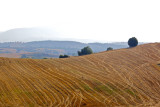 Macedonian fields