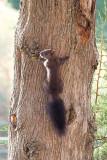 Squirrel near our hostel in Agios Georgios