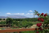 Milia view