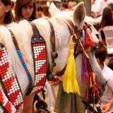 Another pilgrim horse