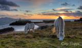two ponies grazing.jpg
