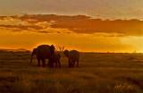 Kenya 1977