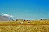 Pérou-105.jpg