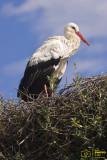 DEHESA DE ABAJO, Marzo 2011