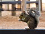 Squirrel Stalking #1