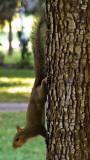Squirrel Stalking #2