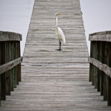 Egret and Dock