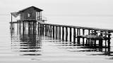 Clay County Docks IX.jpg